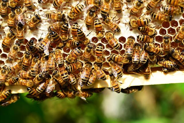 Pyłek kwiatowy (pyłek pszczeli) – bomba witaminowa na porę jesienno – zimową
