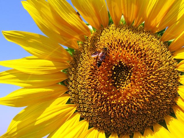Powstał nowy portal pszczelarski www.pszczoly.eu